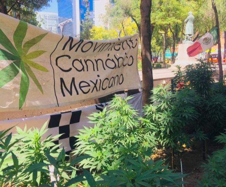 Movimiento Cannabis México