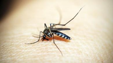 dengue Hidalgo