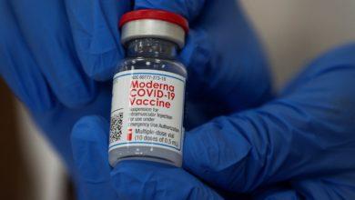expediente de vacunacion